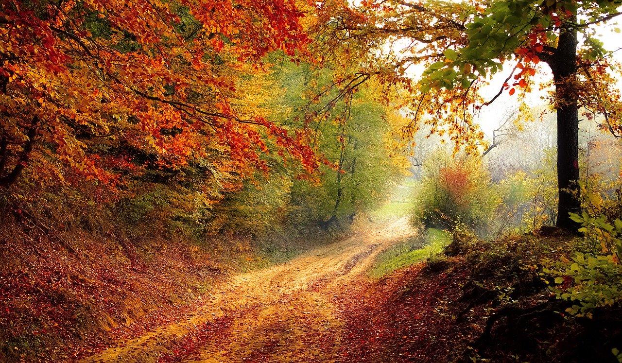 pomysły na jesien - co robic